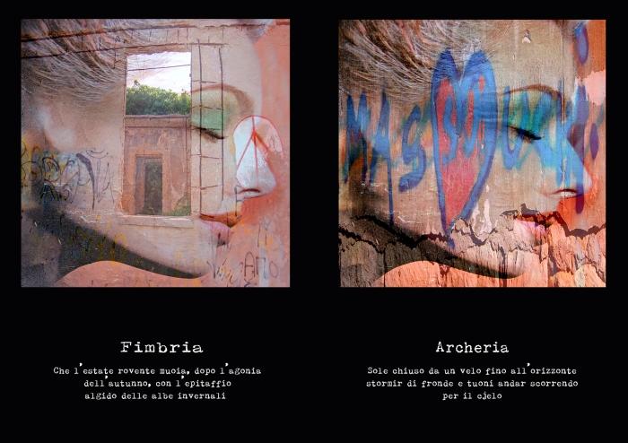 ARCHERIA FIMBRIA.jpg
